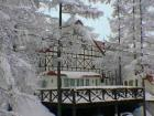 雪景色とミモザ.jpg