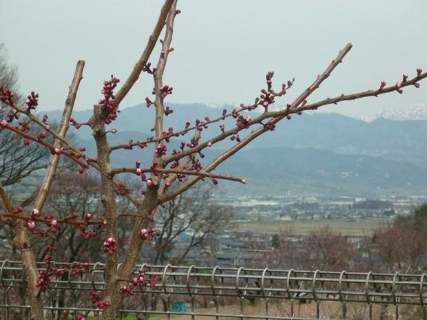花さか村から撮影(森)