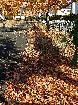 枯葉の絨毯と影