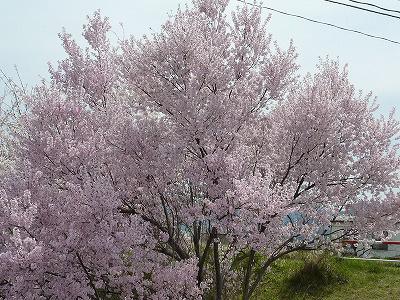 篠ノ井塩崎